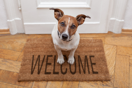 welcome-dog.jpg