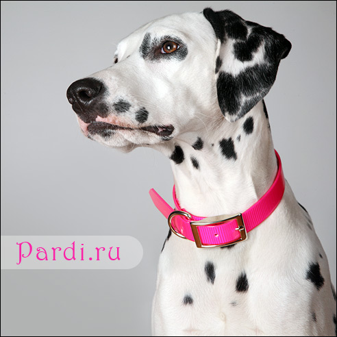 http://pardi.ru/images/SunGlo_pink.jpg